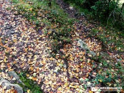 Parque Natural Sierra de Cebollera (Los Cameros) - Acebal Garagüeta;caminatas sierra madrid rutas s
